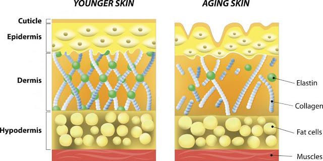 Collagen gold giảm stress mang lại vẻ đẹp cho làn da