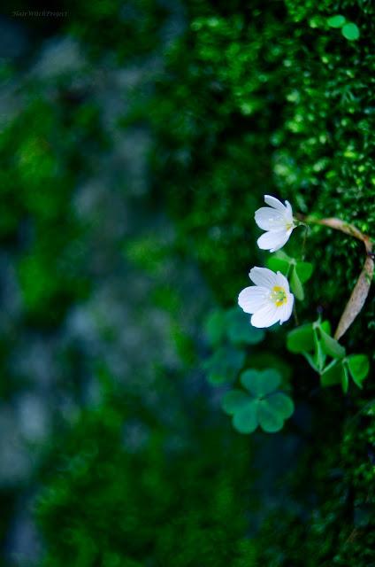 fotogafia | wiosna | kwiaty