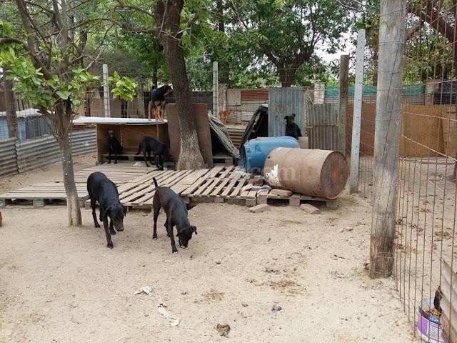 limpiezas muertes animales Sevilla