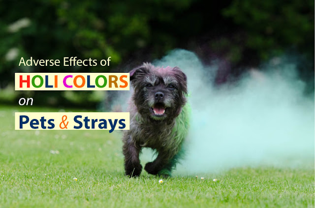adverse effects of holi colours