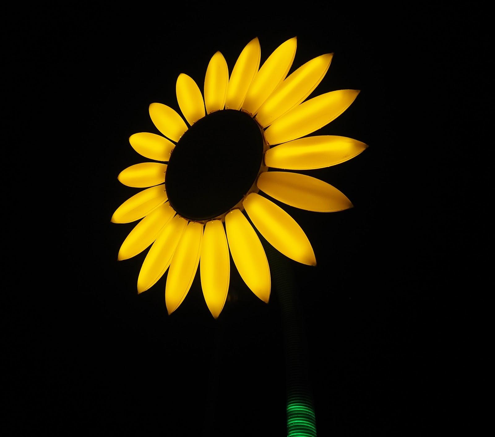 Vivid Sydney Sunflower