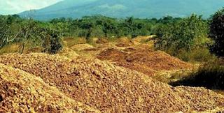 Πέταξαν εκατομμύρια φλούδες πορτοκαλιού σε μία ερημική περιοχή. 16 χρόνια αργότερα, δεν πίστευαν στα μάτια τους!