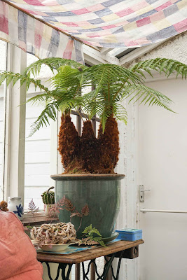 tree fern after being chopped
