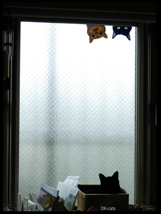 """Photoshopped Cat picture • """"Hey, come with us we have tunna and fresh catnip. Come to the dark side..."""""""