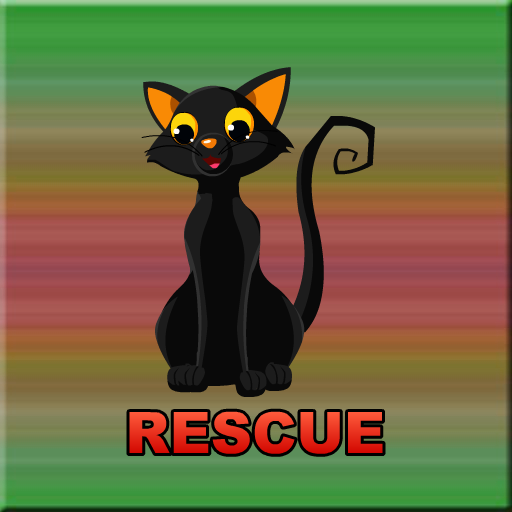 Cute Black Kitten Rescue