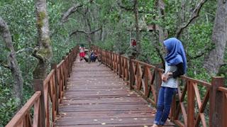 hutan mangrove penajam