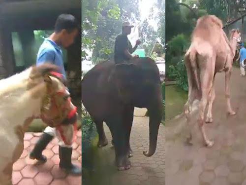 Parade satwa Kebun Binatang Bandung