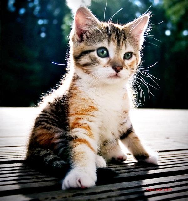 tổng hợp những con mèo xinh