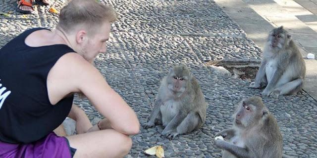 Monyet dengan bule