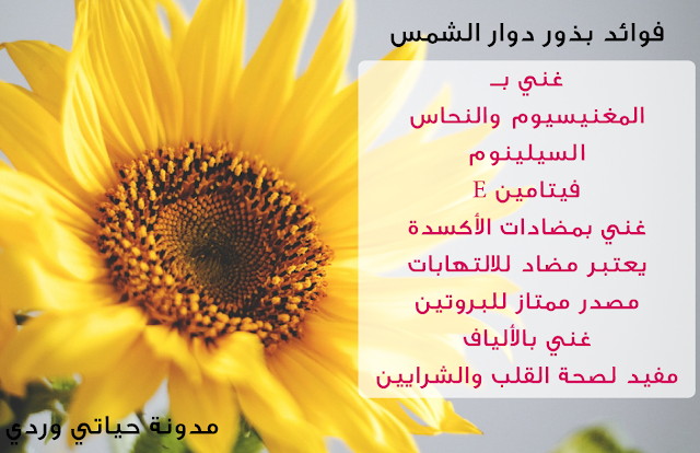 فوائد بذور دوار الشمس