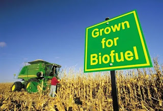 energi alternatif biofuel
