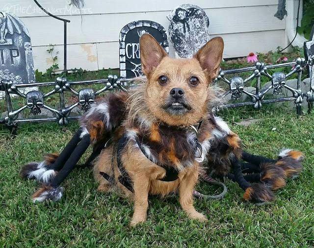 Mini Review: Pet Krewe Spider Costume for Dogs