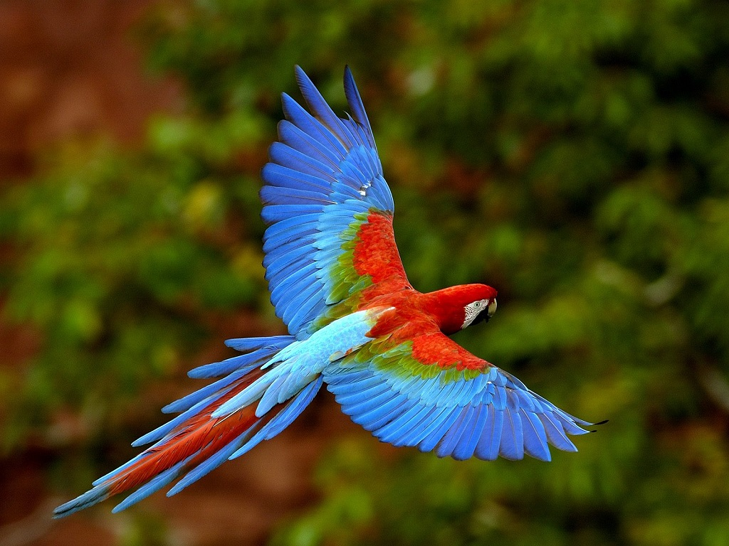 Worldimage4u Colorful And Different Types Of Birds For