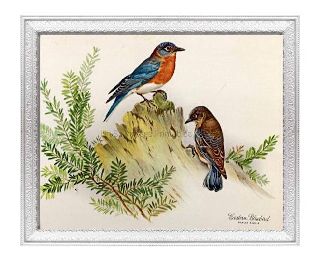 digital bird print etsy