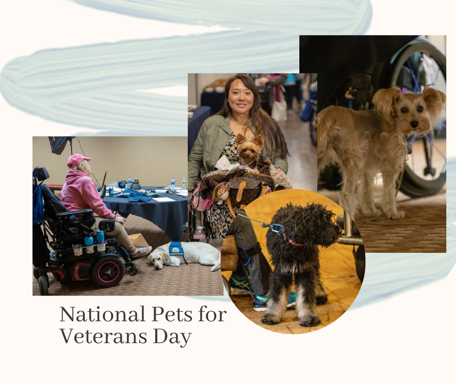 National Pets for Veterans Day Wishes Pics