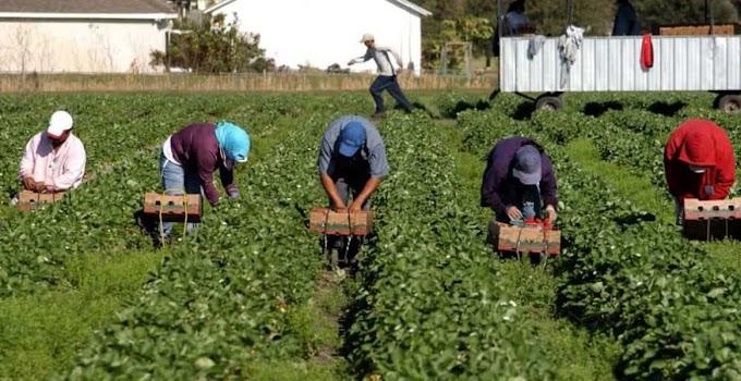 SONDAGGIO SULLA CONSAPEVOLEZZA CIRCA LO SFRUTTAMENTO DEI LAVORATORI NELL' AGROALIMENTARE