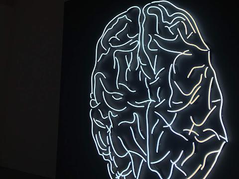 El segundo cerebro