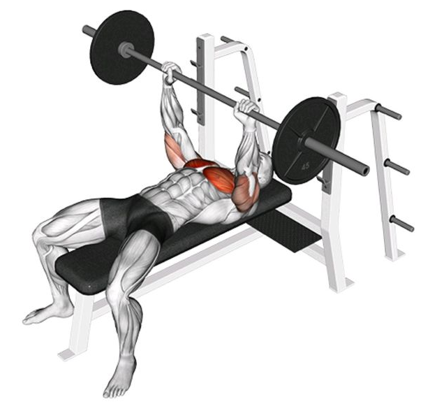 7 Best Chest Workout For Beginners at Home