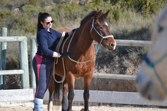 Stage d'équitation éthologique et passage des Savoirs