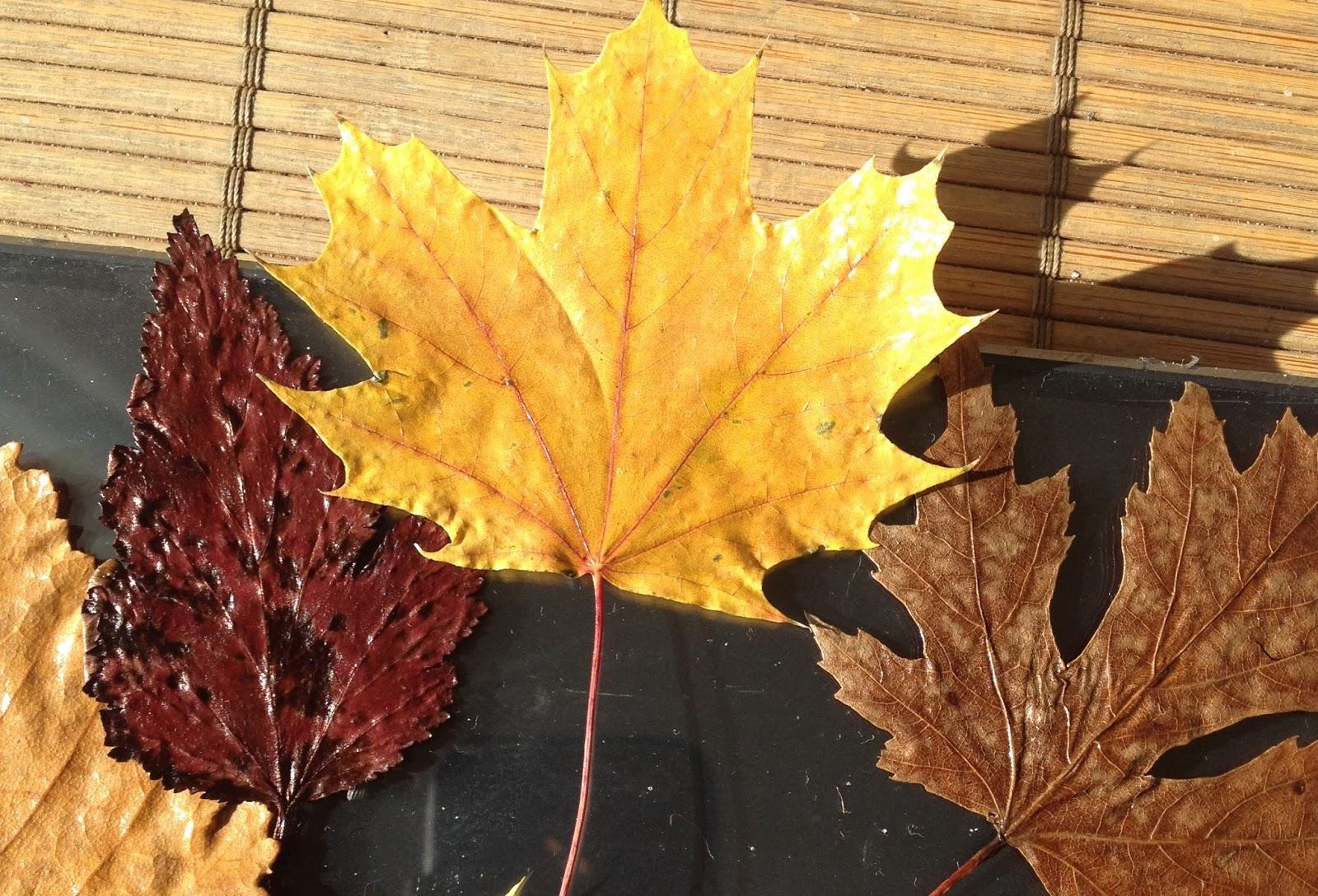Susan Marie : Preserving & Framing Autumn Leaf Tutorial