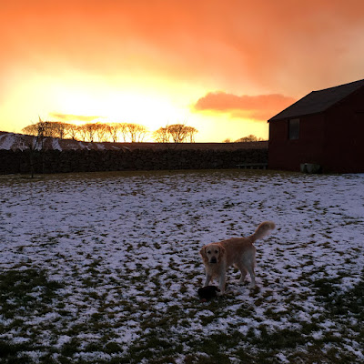 Snowy Sunset - January 2018 - Laura Whispering