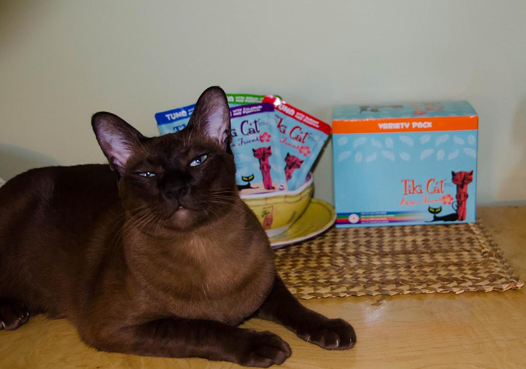Cats Tales Reviews Is Pumpkin Good For Cats Tiki Cat Food Has The Answer