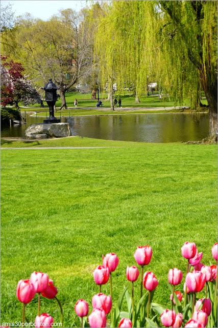 Primavera en el Boston Public Garden