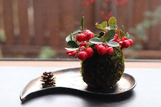 金属釉の勾玉の形のお皿の上のゴールテリア苔玉と松ぼっくり