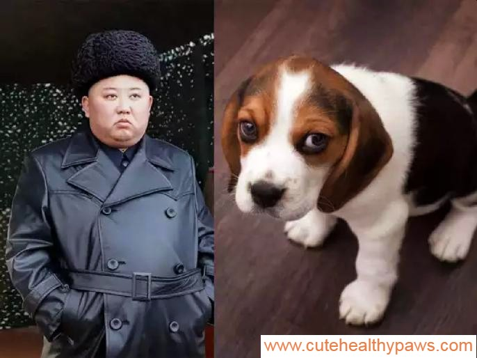 North Korea dogs
