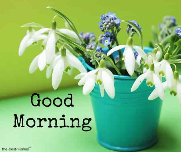 good morning wishes images with flower bucket