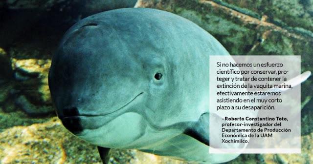 Con la llegada del PVEM a la SEMARNAT, la extinción de la Vaquita Marina se agudizó