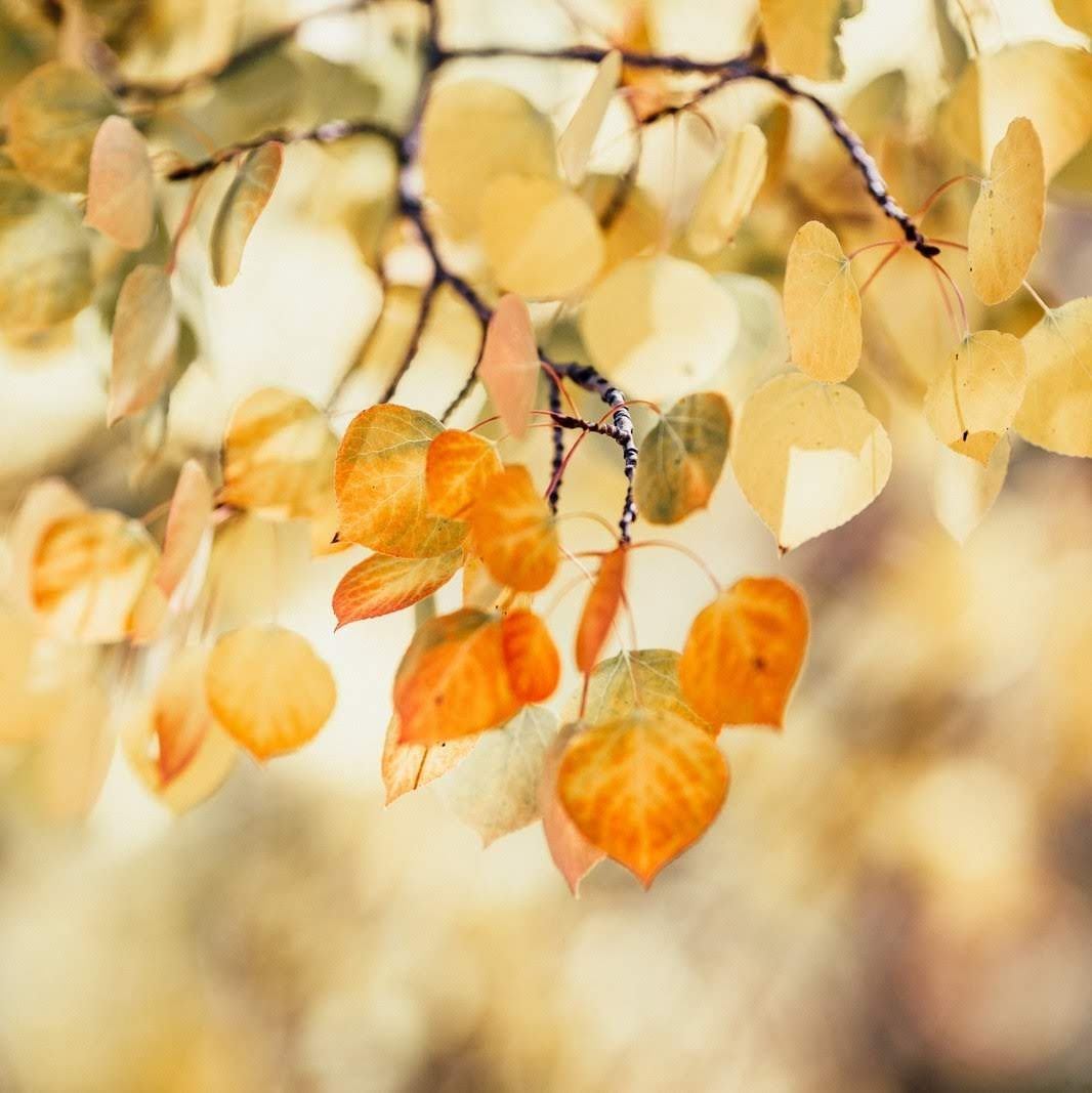 Leaves in Fall | Photo by Katie Moum via Unsplash