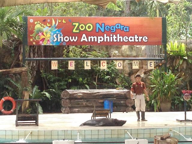 pertunjukan sea lion di zoo negara