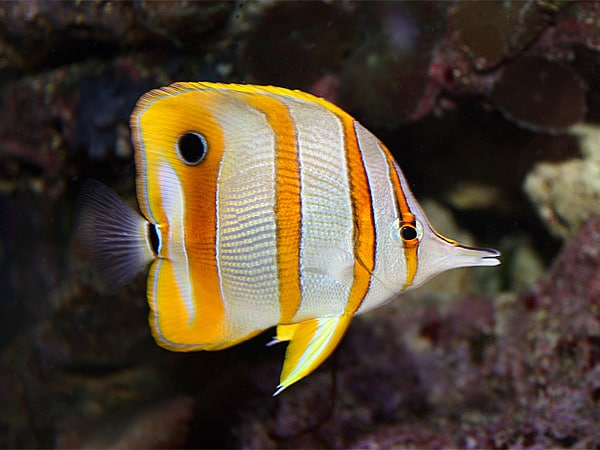 17 Jenis Ikan Hias Air Laut Yang Mudah Dipelihara Ikanesia Id