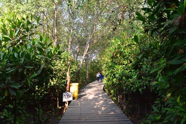 Tiket masuk hutan Mangrove Surabaya