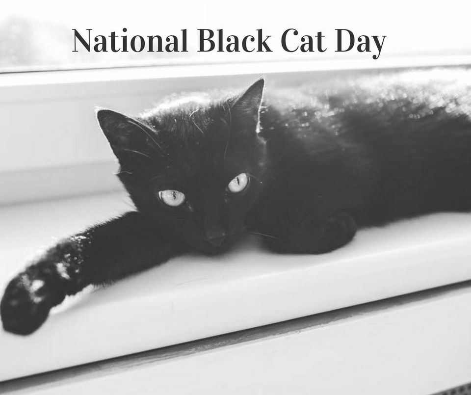 National Black Cat Day Wishes Photos