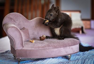 cara mengusir tikus di dapur   cara tradisional  mengusir tikus dengan bahan dapur yang merajalela  dan membandel   cara mengusir tikus dengan kapur barus   cara mengusir tikus dengan suara