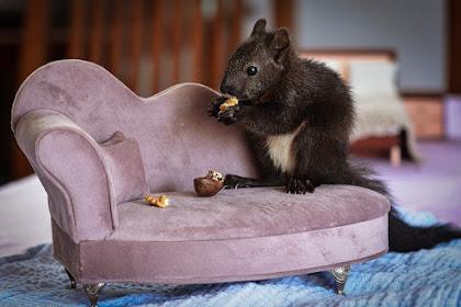 cara mengusir tikus di dapur yang merajalela