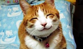 Gambar Wallpaper Kucing Lucu Banget 200021
