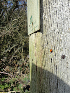 A Ladybird at Sharpenhoe Clappers