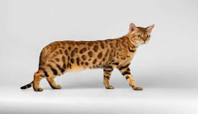10 MOST UNIQUE HYBRID ANIMALS IN THE WORLD