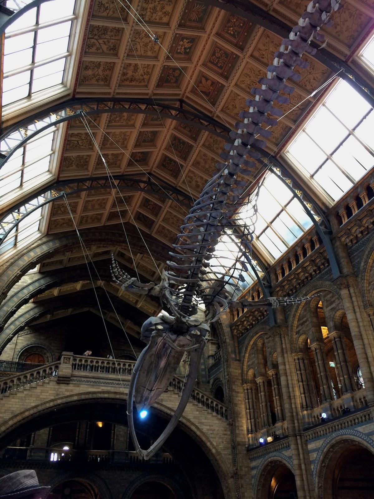 muzeum historii naturalnej londyn, muzea londyn, londyn atrakcje, muzeum dinozaurów londyn