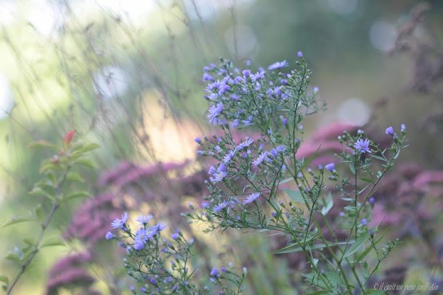 floraison bleu lavande automnale