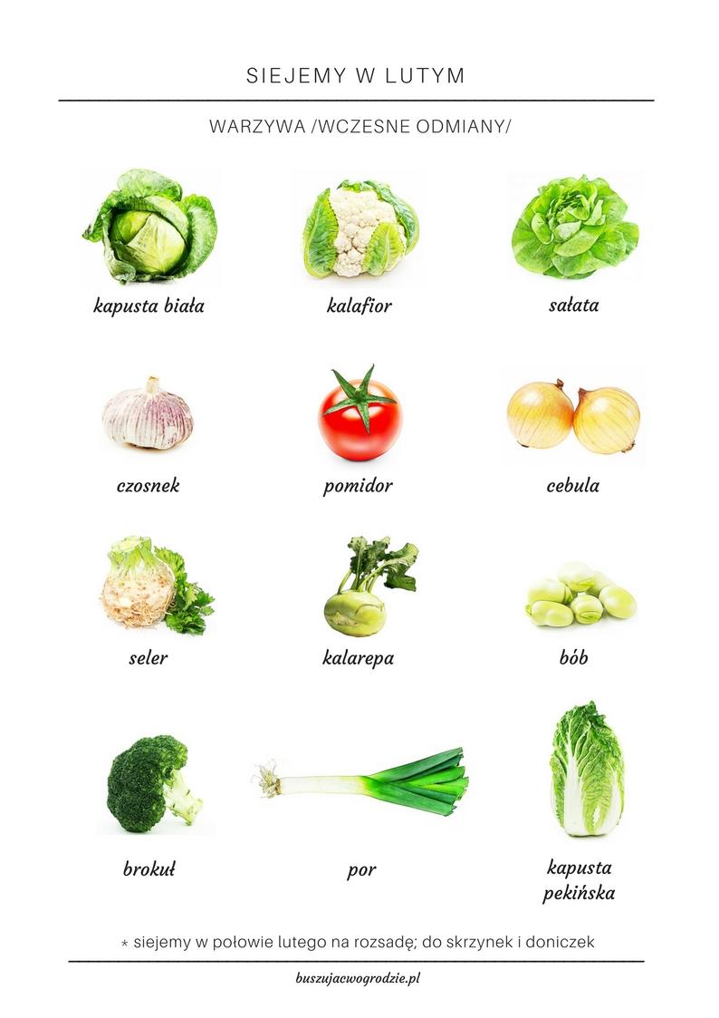 jakie warzywa siejemy na rozsadę?