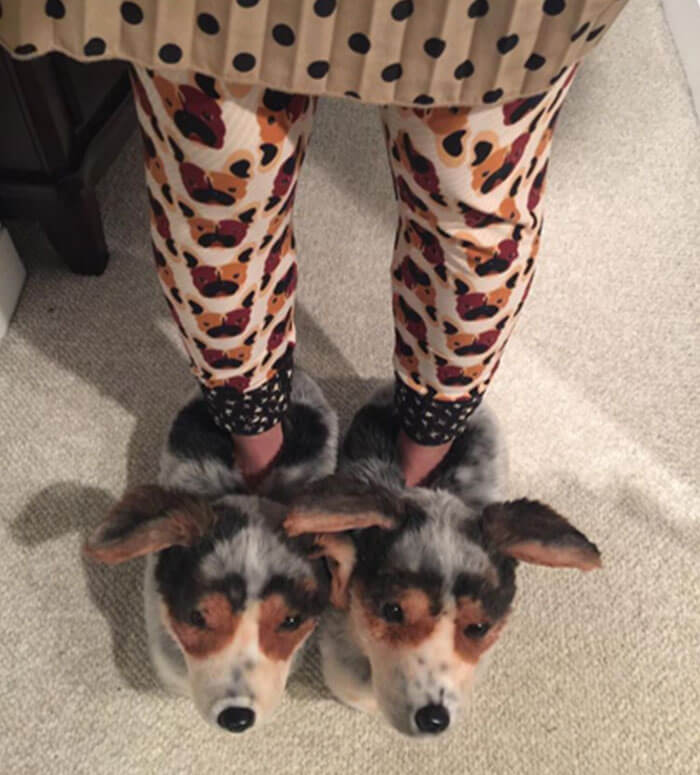 These Adorable Custom Pet Slippers Are The Dream For Every Pet Owner