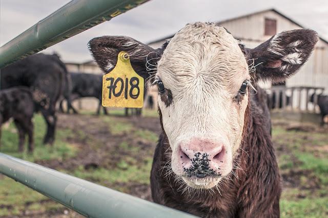 Teknologi bidang peternakan