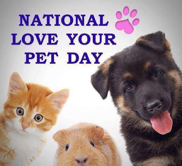 National Love Your Pet Day Wishes Beautiful Image