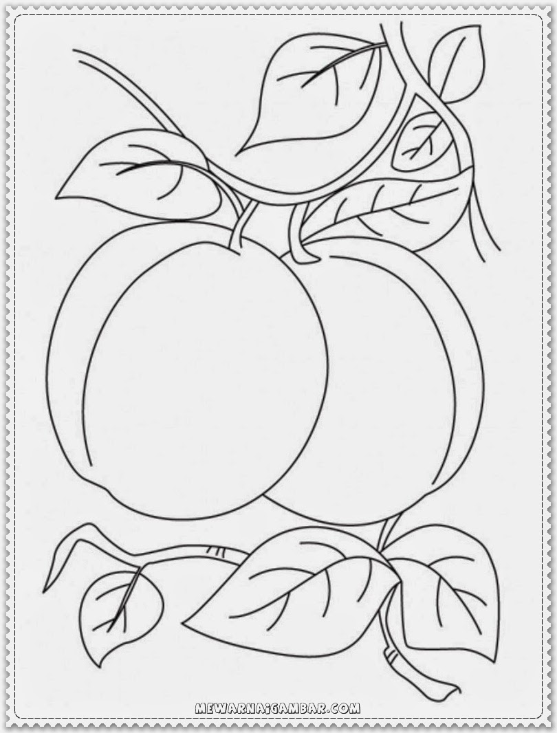 Apricot Coloring Pages For Preschoolers