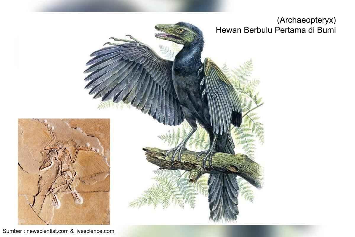 archaeopteryx, dinosaurus karnivora berbulu
