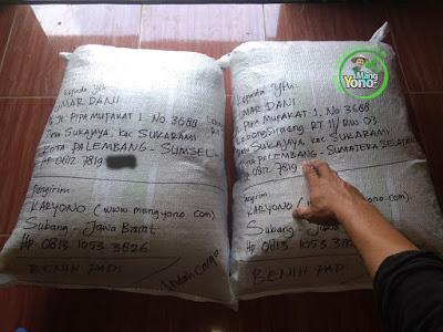 Benih Padi TRISAKTI Pesanan  UMAR DANI Palembang, Sumsel    (Sesudah di Packing)